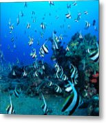 Hawaiian Reef Scene Metal Print
