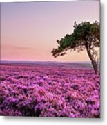 Heather At Sunset  Metal Print