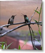 2 Hummingbirds Metal Print