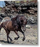 Icelandic Black Stallion, Iceland Metal Print
