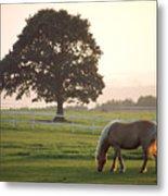 Irish Horse In The Gloaming Metal Print