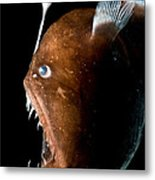 Johnsons Abyssal Seadevil Metal Print