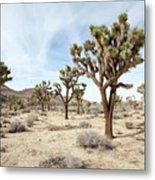 Joshua Tree National Park, California Metal Print