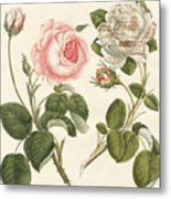Kinds Of Roses Metal Print
