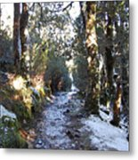 King Billy Forest Cradle Mountain Metal Print