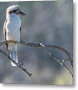 Kookaburra On A Branch Metal Print