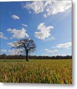 Lone Oak Tree In English Countryside Metal Print