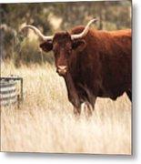 Longhorn Cow In The Paddock Metal Print