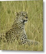 Lovely Leopard Metal Print