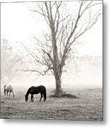 Magical Morning Metal Print