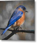 Male Eastern Bluebird Metal Print