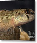 Mobile Logperch Percina Kathae Metal Print