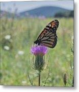 Mountain Meadow Monarch Metal Print