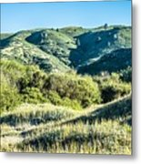 Muir Woods Forest Drive By Nature Near San Francisco Metal Print