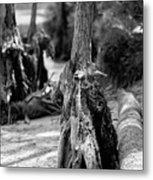 Nature Scenes Around Hunting Island South Carolina Metal Print