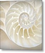 Nautilus 3by4 Metal Print