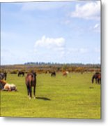New Forest - Hampshire - Uk Metal Print