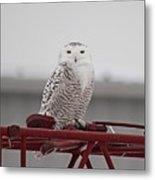 Snowy Owl 9470 Metal Print