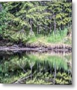 Northern Landscape And Nature In Alaska Panhandle Metal Print