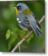 Northern Parula Metal Print