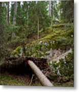 Old Forest In Kauppi Tampere Metal Print