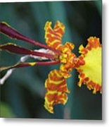 Orchid Expression 3892 Metal Print