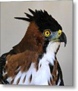 Ornate Hawk-eagle Metal Print
