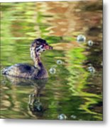 Pied-billed Grebe Bubbles Metal Print