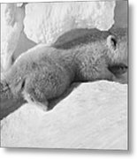 Polar Bear Cub Metal Print