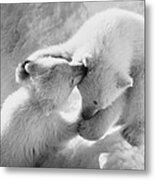 Polar Bear Cubs Metal Print