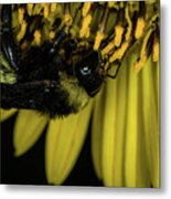 Pollen Collector 3 Metal Print