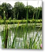 Pond At Beaver Island State Park In New York Metal Print