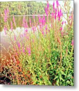 Pond In The Bershire Mountains, Massachusetts Metal Print