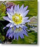 Purple Water Lily Pond Flower Wall Decor Metal Print
