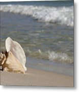 Queen Conch On The Beach Metal Print