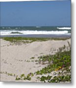 Railroad Vine And Sea Oats On The Atlantic In Florida Metal Print