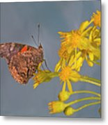Red Admirable Butterfly Metal Print
