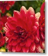 Red Flower Close Up Metal Print