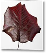 Red Leaf 4 Metal Print