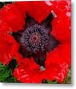 Red Poppy Photograph Metal Print