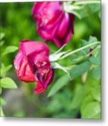 Red Rose Bud Metal Print