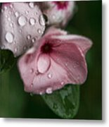 Refreshed Metal Print by Bonnie Bruno