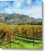 Rows Of Grapevines In Napa Valley Caliofnia Metal Print