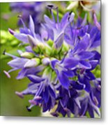 Royal Botanical Garden Of Madrid Metal Print