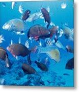 Saipan Marine Life Metal Print