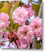 Sakura Flowers Metal Print