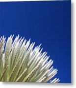 Silversword Plant Metal Print