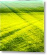 Skagit Valley Daffodils Metal Print