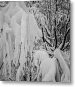 Snow Covered Trees In The North Carolina Mountains During Winter Metal Print