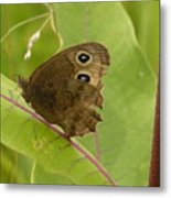2-spotted Wood Nymph Metal Print